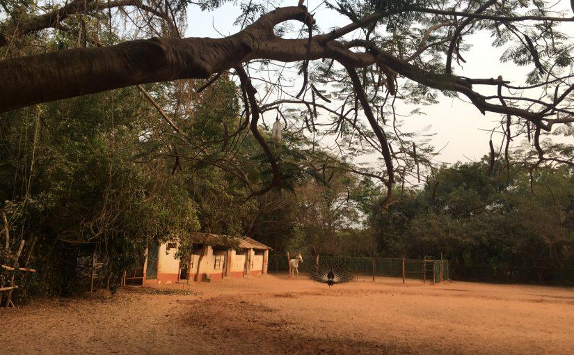 Annabelle. Eine weitere Begegnung in Auroville