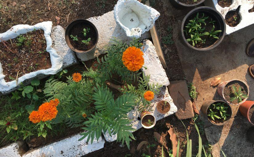 Seeds of Community. Kleine Pflänzchen der Verbundenheit