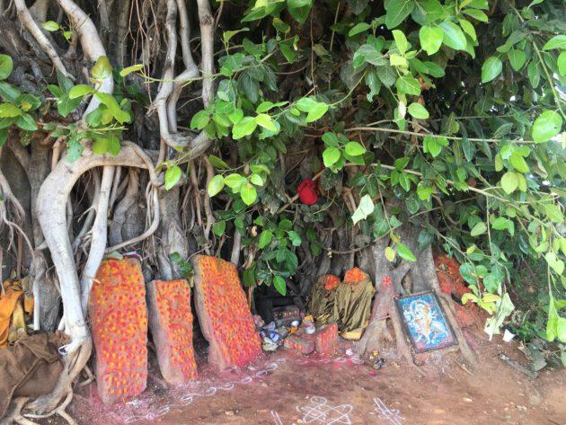 Baumtempel Indien